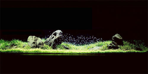 Pierre Huyghe's Aquarium Project – An Introduction to the works of Amano Takashi | Available Works